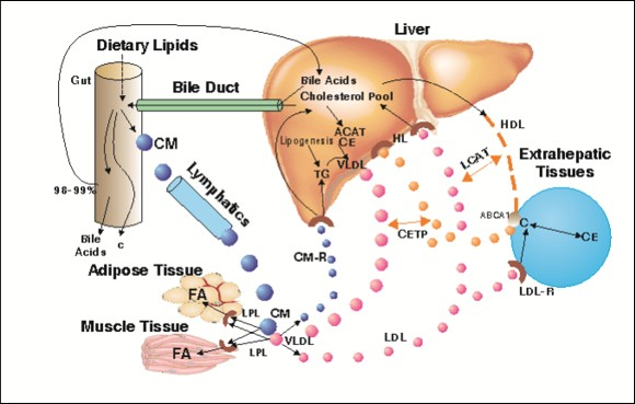 insulin steroid induced hyperglycemia
